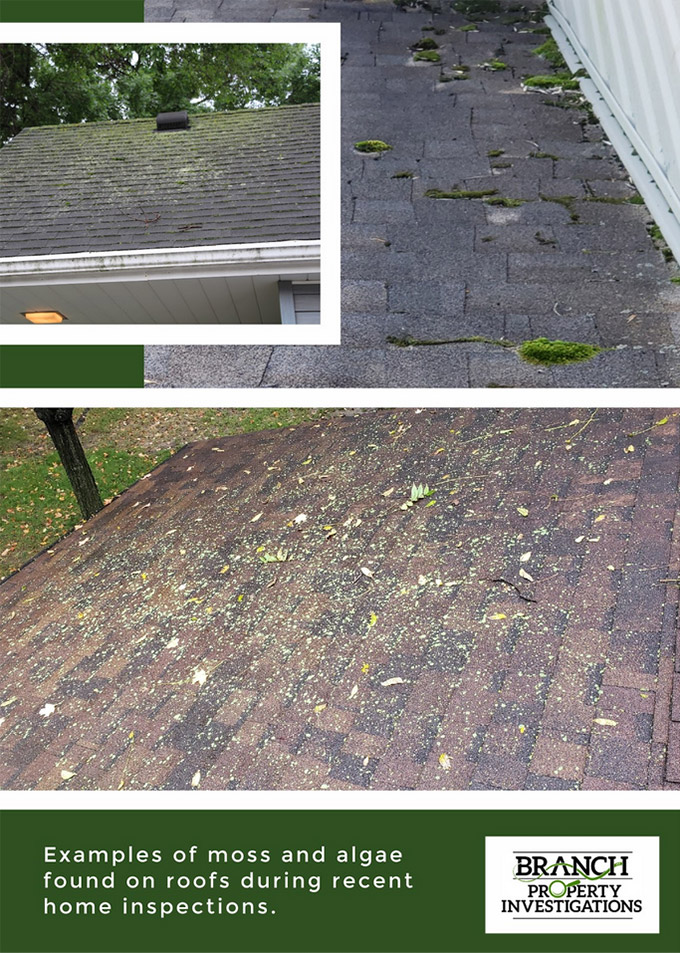 Moss and algae on roof inspection