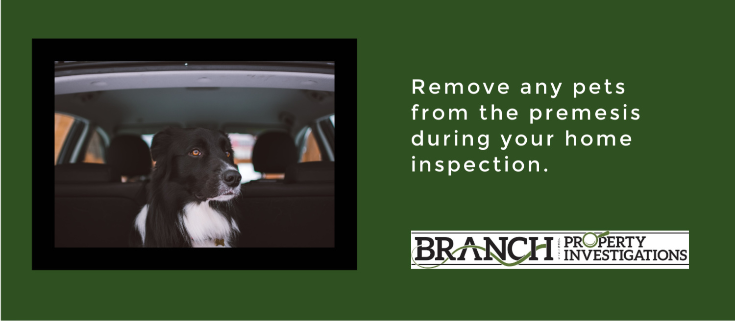 Remove pets during home inspection