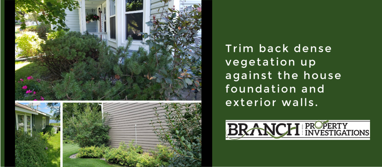Trim vegetation around house before home inspection