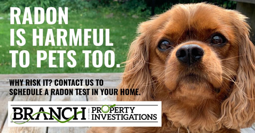 pets and radon