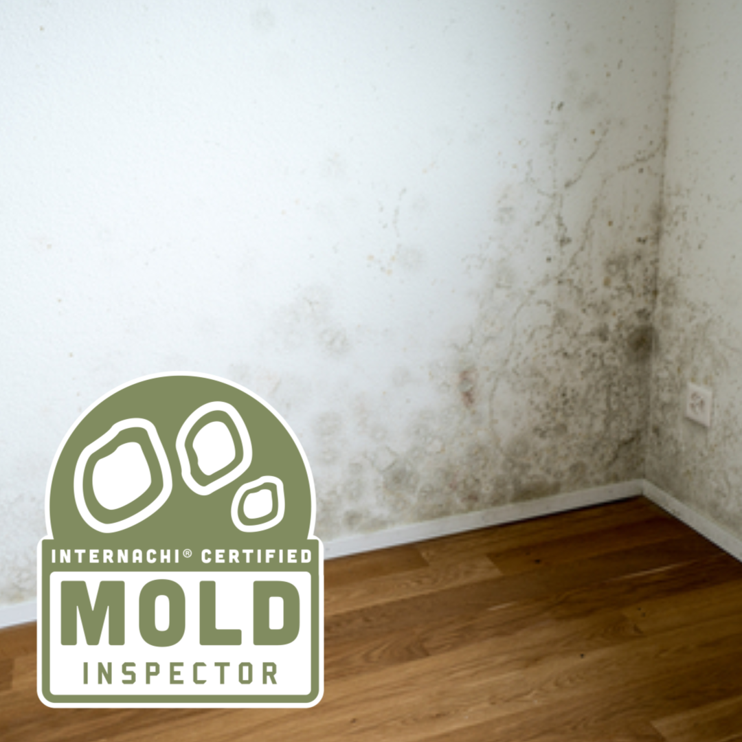 mold inspect