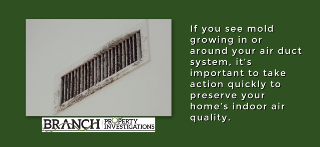 mold in vent