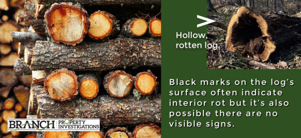 wood rot log