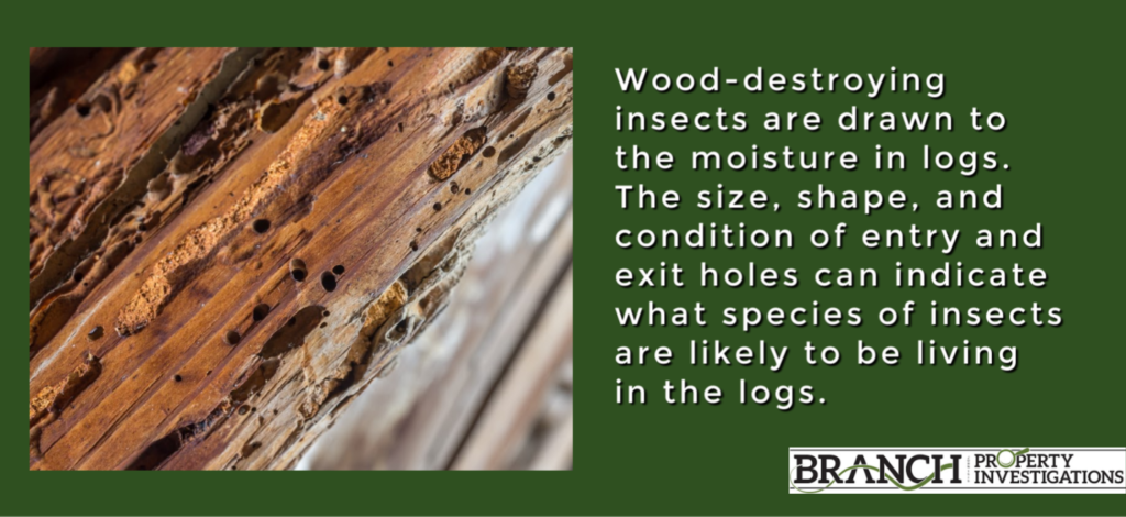 wood destroying insects log