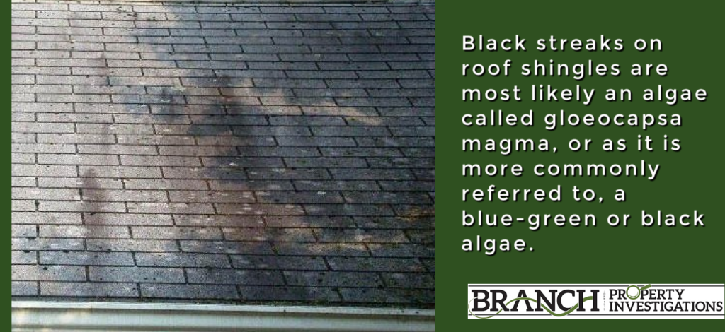 black algae roof